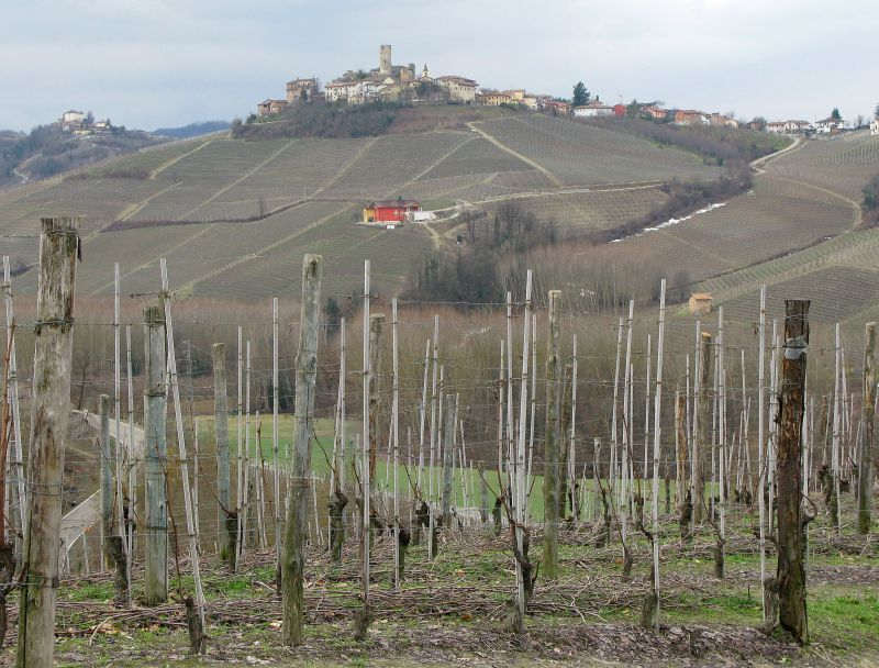 Castiglione falletto with vines and red house small