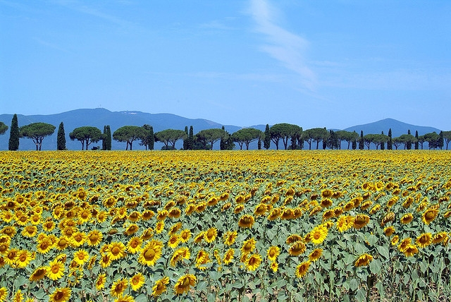 Off the beaten path in Tuscany Maremma