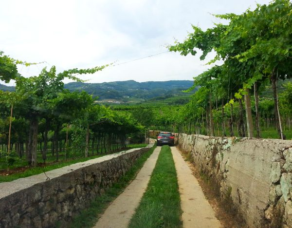 Wine tasting Italy Valpolicella, driving in the vineyard